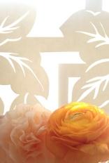 paper_flower_real_flower